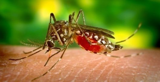 dengue in singapore